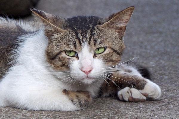 shrine_new_cat201606