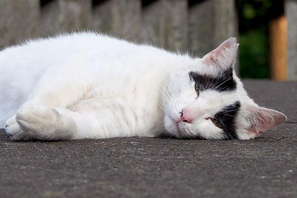 sweetcat_yako_sleepyface
