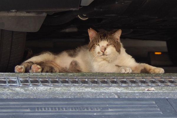 車の下にneuterドンちゃん
