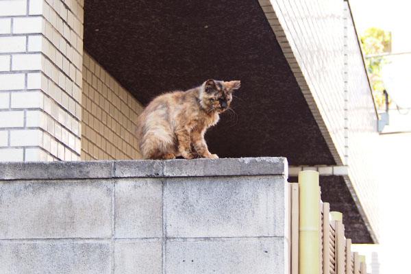 塀の上のチイちゃん