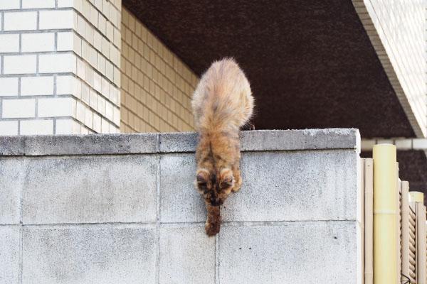 塀から降りて来るとこ
