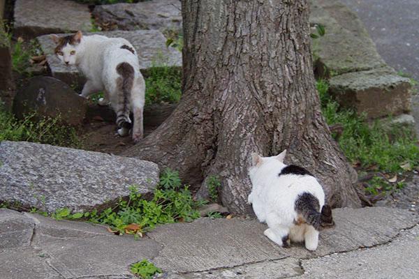 木でつめとぎ