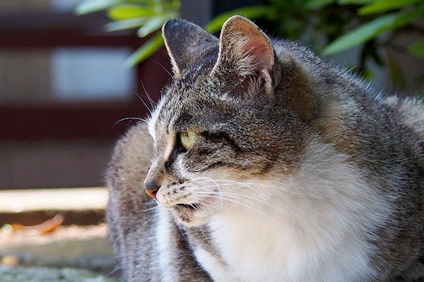 shizuku profile