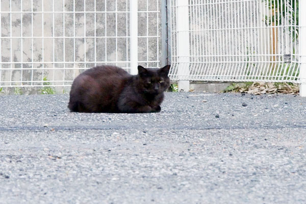 blackcat_miton