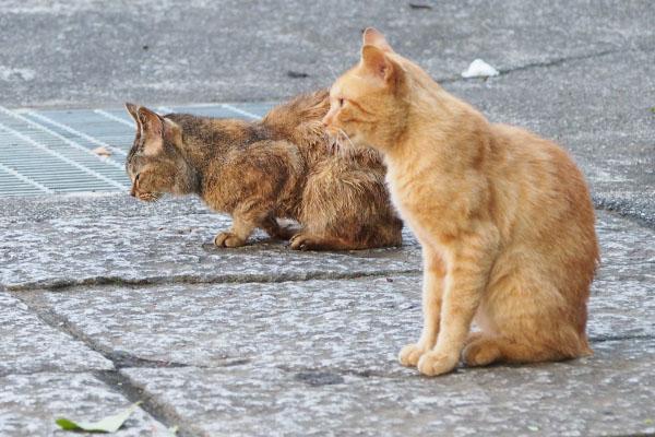 待つ猫ナチャルル