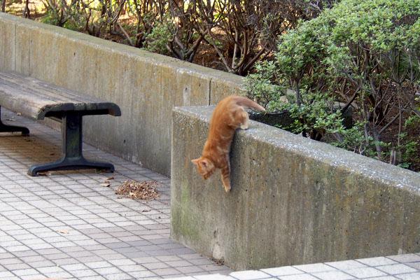 仔猫塀を降りる