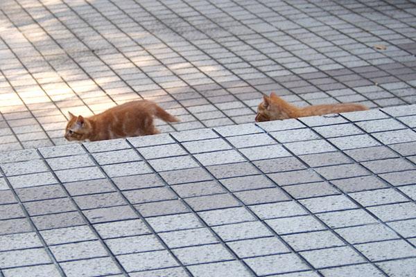 追いかける仔猫1,2