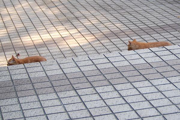 離される仔猫2