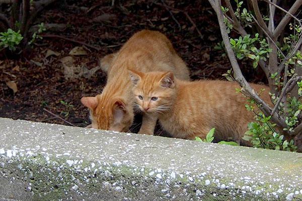 食べるアンと仔猫1