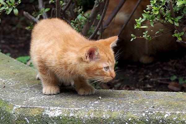 出て来た仔猫
