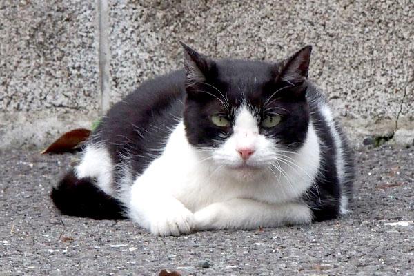 ニコルの猫侍風ショット