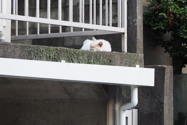 メルはお気に入りの場所で寝始めた