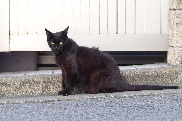 細面でしっぽ長い黒猫さん