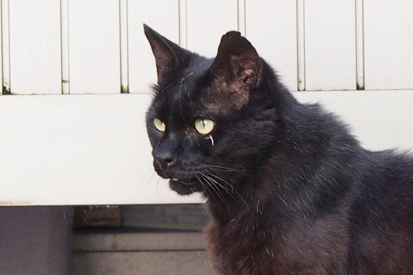 new black cat at matsuhouse