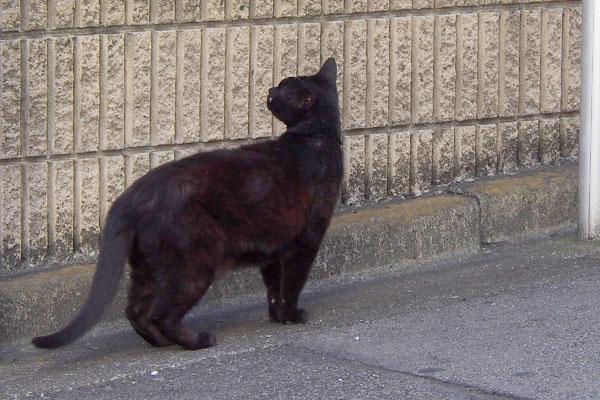 名残惜しそうに松邸を見る黒猫さん