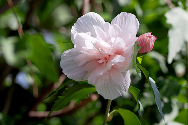 nakameguro_flower