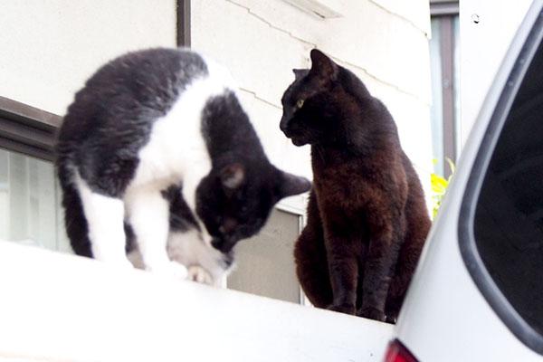 コウガはずっとドアを見つめて