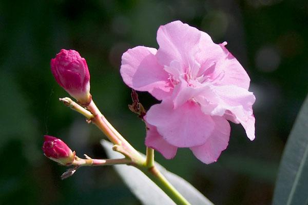 flower at shirokane