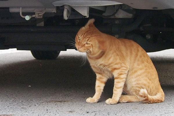 隣りの車の下で頭を振るトト