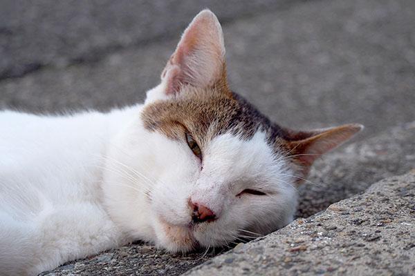 道路に体を出したまま寝る
