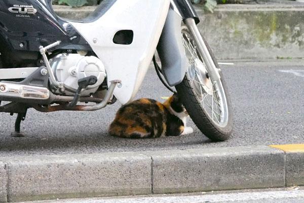 バイクの下は安全リコ