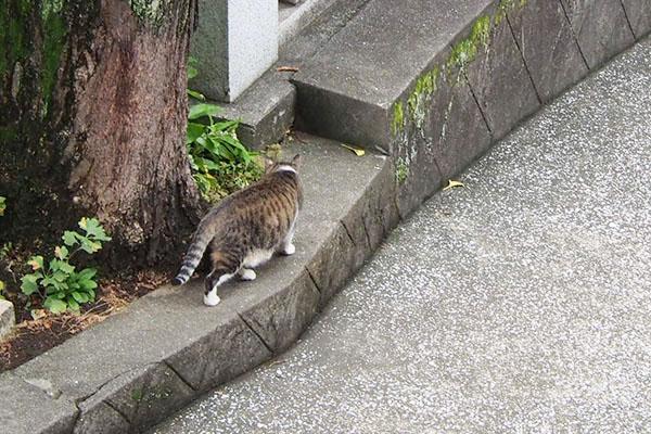 shizuku go to ground