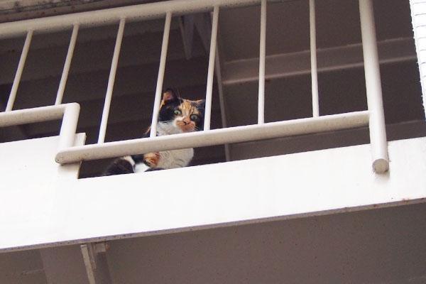 この日は2階と3階の間にリコ