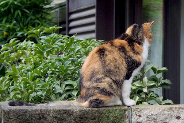 窓を見つめるオトワちゃん