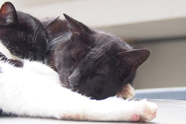 kouga happy sleeping