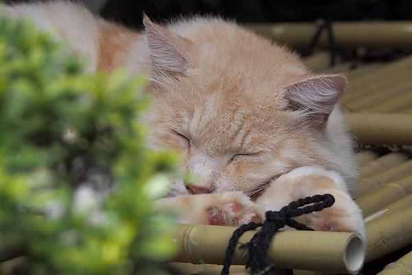 寝ている風ナリコマんぬ