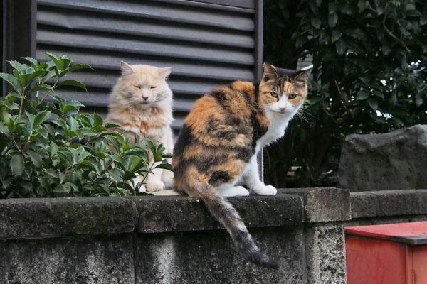 オトワちゃんとナリコ
