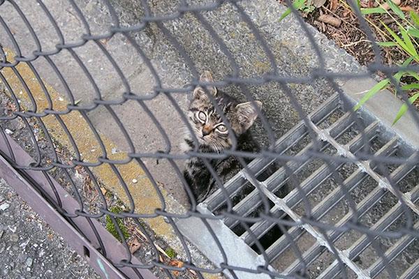 接近見上げる仔猫引き