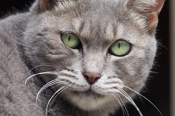 cipi closeup green eyes