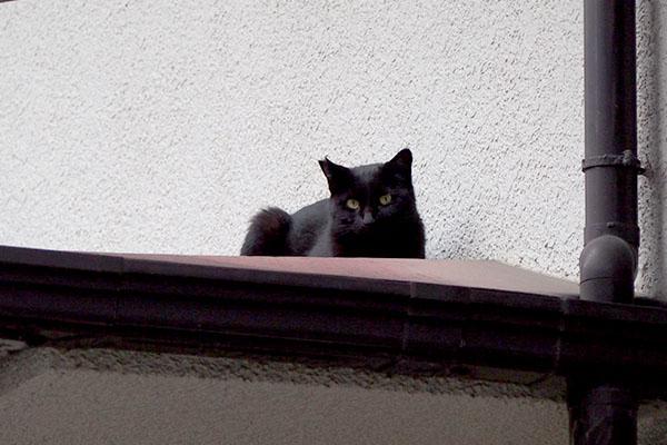 キト君発見