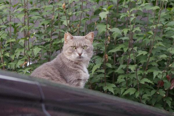 座って遠くを見るグリ君