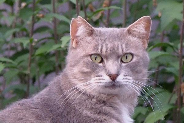guri fing another cat near