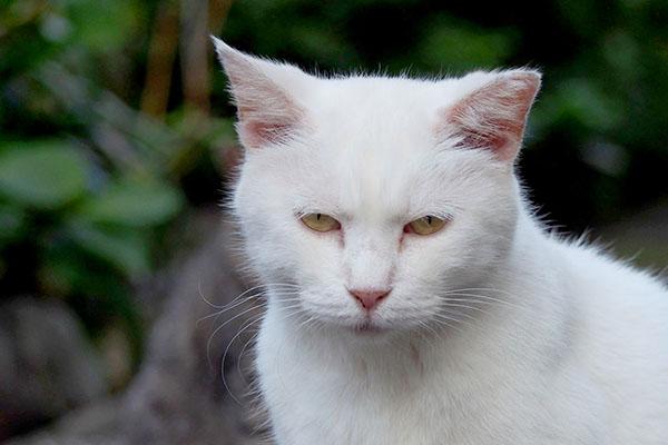 Haku wrinkles between the eyes