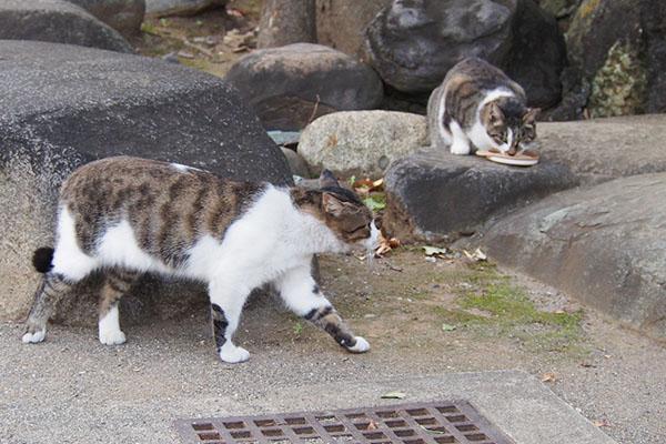 shizuku eating reota comes