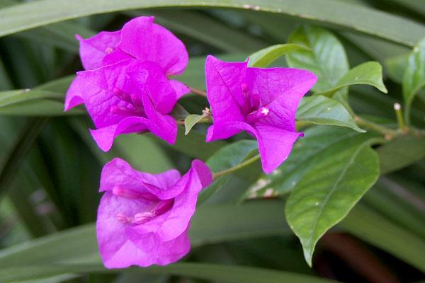 deep pink flower 3