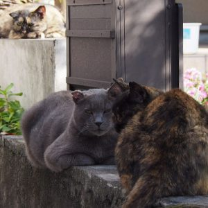 3cats on line