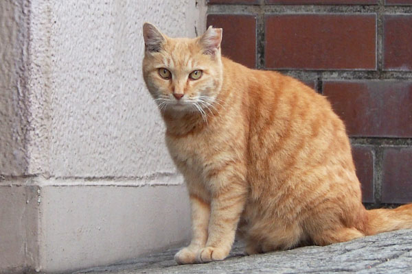 gingercat jill