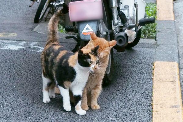 kiss to sister