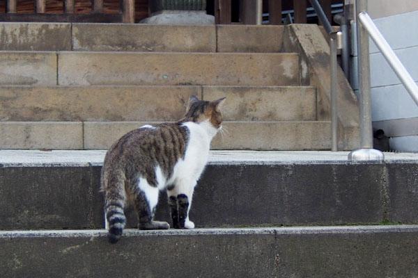 階段の途中のレオ太