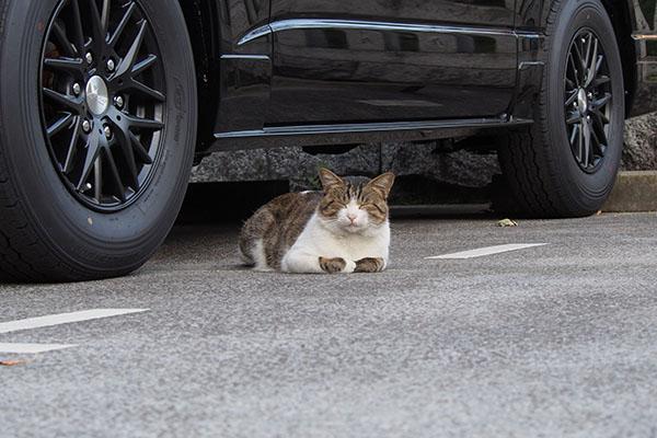 車の前に出てるレオ太