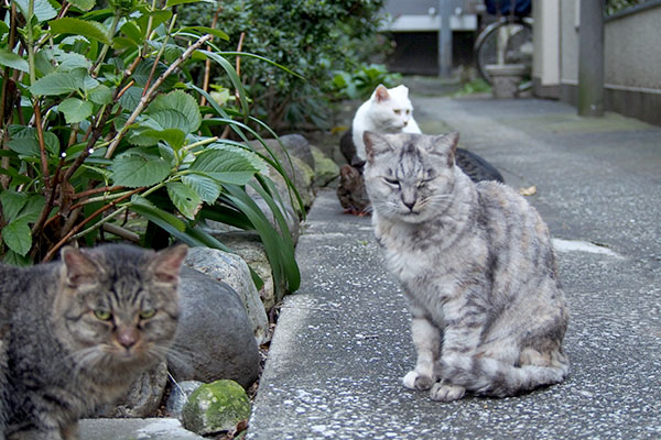 5cats gin funnyface