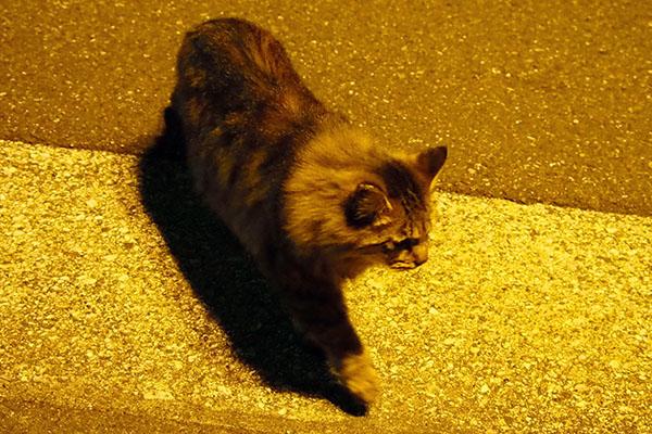 Maron at night
