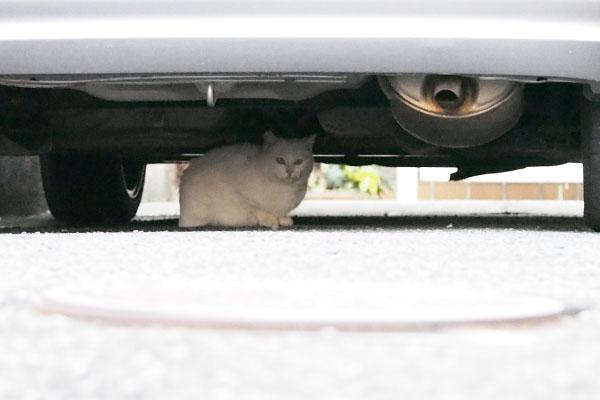 うさぎちゃん車の下