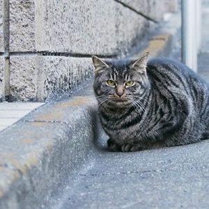 matsuhouse new tabby cat