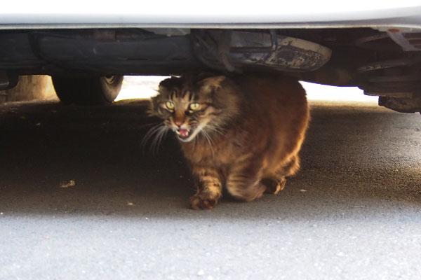 車の下からこにゃにゃちは