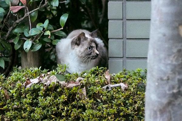 watching bk cat